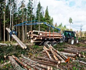 Broson Wheels –Bild på skogsmaskin i full aktion